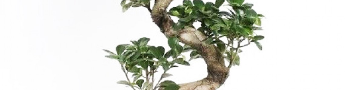 Οδηγίες Φύτευσης / Βλάστησης / Καλλιέργειας Μπονσάι Δέντρων