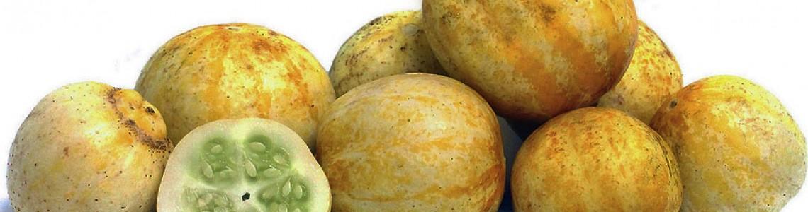 Αγγούρι – Λεμόνι Κρύσταλλο Οδηγίες Καλλιέργειας Σπόρων