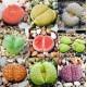 Lithops/Λιθοπες Ανάμικτα είδη 20 σπόροι