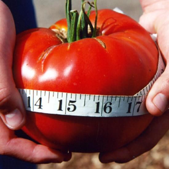 Ντομάτα Delicious - 20 Σπόροι